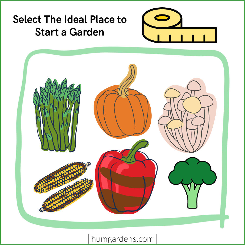select the ideal place to start a garden